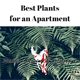 Best Apartment Plants